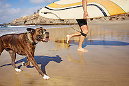 A surfer runs on the beach with a happy pet dog.