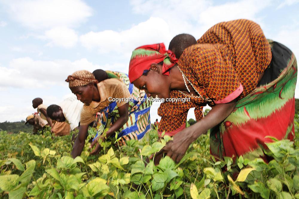 Agriculture in Burundi