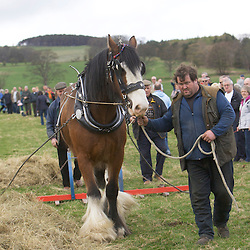 Festival of the Heavy Horse<br />