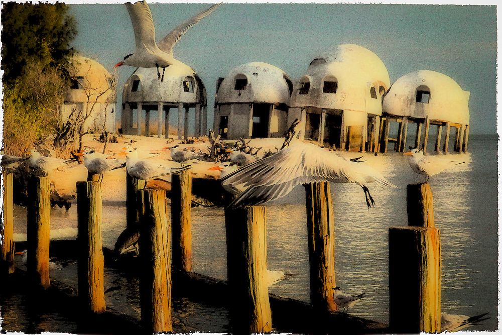 Royal Terns lite on pilings near the Dome House at Cape Romano, Florida at the start of the 10,000 islands