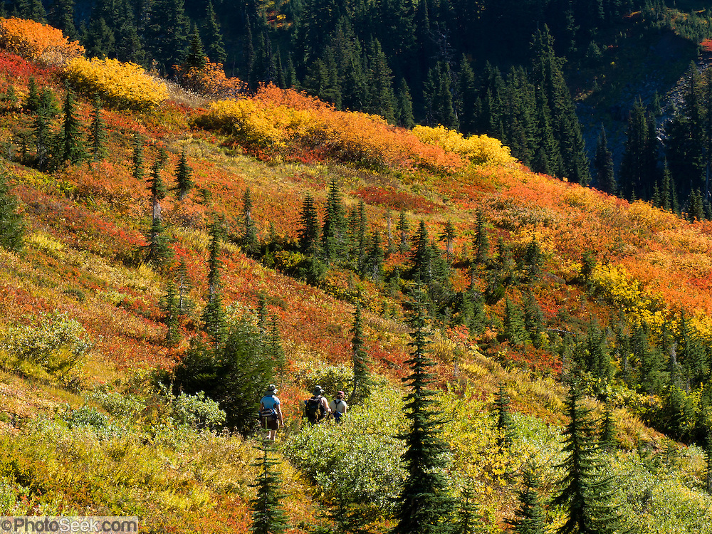 Three women hikers explore fall foliage colors in Paradise Valley in Mount Rainier National Park, Washington, USA. Skyline Trail is one of the great day hikes of the world.