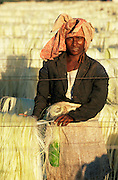 Woman putting sisal to dry on racks. Berenty, Madagascar. plants, harvesting, people.