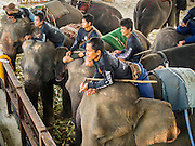 "28 AUGUST 2014 - BANGKOK, THAILAND:  Mahouts on their elephants watch the action at the King's Cup Elephant Polo Tournament at VR Sports Club in Samut Prakan on the outskirts of Bangkok, Thailand. The tournament's primary sponsor in Anantara Resorts. This is the 13th year for the King's Cup Elephant Polo Tournament. The sport of elephant polo started in Nepal in 1982. Proceeds from the King's Cup tournament goes to help rehabilitate elephants rescued from abuse. Each team has three players and three elephants. Matches take place on a pitch (field) 80 meters by 48 meters using standard polo balls. The game is divided into two 7 minute ""chukkas"" or halves.     PHOTO BY JACK KURTZ"