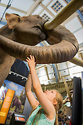 Beatriz Mendes looks up at a life size model of an adult. Mammoths: Ice Age Giants at the Natural History Museum (opens 23 May 2014)<br /> It includes huge fossils and life-size models of mammoths and their relatives tower above you and meet Lyuba, the world's most complete mammoth, as she takes centre stage in the exhibition for her first appearance in western Europe. She is the star of the show, a baby woolly mammoth discovered in Russia's Yamal Peninsula of Siberia in May 2007. She died around 42,000 years ago at just one month old. Her body was buried in wet clay and mud which then froze, preserving it until she was found by reindeer herder Yuri Khudi and his sons, as they were searching for wood along the frozen Yuribei River thousands of years later. The exhibition also includes some of the best-known species, from the infamous woolly mammoth and the spiral-tusked Columbian mammoth to their island-dwelling relative the dwarf mammoth. South Kensington, London.