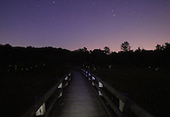 Chester, New York - The elevated boardwalk, fireflies and stars at Goose Pond Mountain State Park on June 26, 2011. The boardwalk is lit by a flashlight.