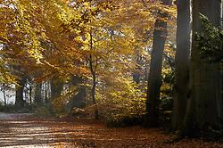 Hilverbeek, herfst, 's-Graveland, Wijdemeren, Noord Holland, Netherlands