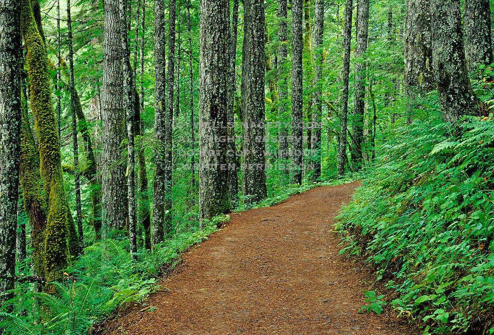 Image of the Eagle Creek Trail in the Columbia River Gorge, Oregon, Pacific Northwest