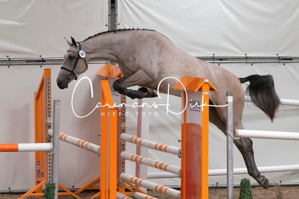 060 - Elzegetty<br /> KWPN Paardendagen - Ermelo 2012<br /> © Dirk Caremans