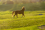 circ 301 Horse, Startop Ranch Montauk, Long Island, New York