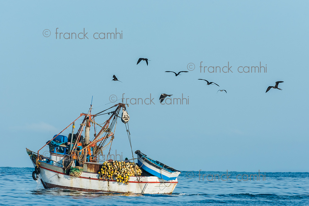 flock of birds and fishing boat in the peruvian coast at Piura Peru