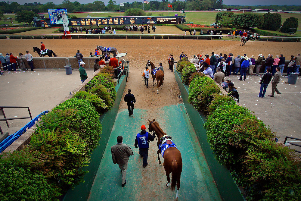 Arkansas Democrat-Gazette/BENJAMIN KRAIN 4-14-07<br /> Little Rock businessman Frank Fletcher's horse Officer Rocket, bottom, and Arkansas Derby winner Curlin. top center, enter the track from the paddock before the Arkansas Derby during the final day of the season in Hot Springs.
