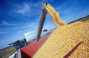 Corn is loaded into a trailer from a combine harvester on a midwestern farm.
