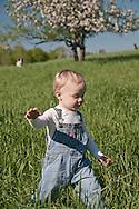 A male toddler in bibs runs through a farm field near a blooming apple tree in spring.
