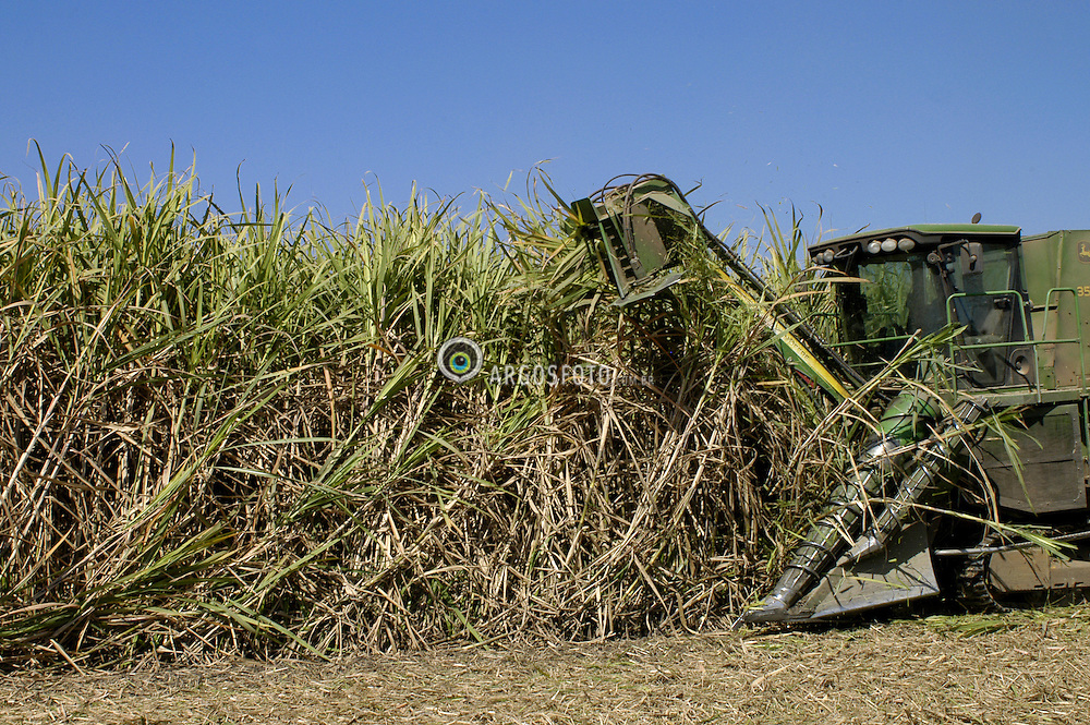 Colheita de cana de acucar mecanizada./Mechanical harvest of sugarcane. Ano 2008. Piracicaba, Sao Paulo.Foto Christian Tragni/Argosfoto
