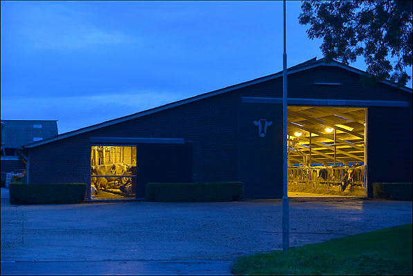 Nederland, the Netherlands, Driel, 22-9-2015Bij het invallen van de duisternis valt een verlichte en open koeienstal op.Cowshed, cows, shed, barn, cow, stable at dusk.FOTO: FLIP FRANSSEN/ HH