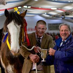 W A & M G King's Hillmoor Eden<br /> f  2012<br /> Sire  Tree House Prince George<br /> Dam  Bog Bank Elizabeth<br /> Breeder  Mr Phillip Moss