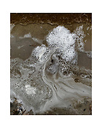Beach foam, also known as spume from the surf of a cranberry bog forms the shape of a stylized Bonsai tree.