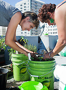 "Anne Hars helps skid row community garden member Lydia Trejo to plant an ""earth box"" on the roof of the The Los Angeles Community Action Network (LA CAN) on Main Street, downtown LA (photo: Ann Summa)."