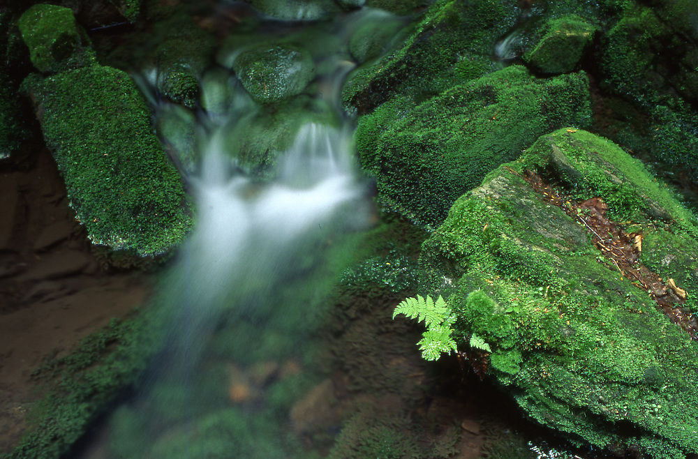 PA Landscape, Mountain Brook, Water and Moss, Tuscarora State Forest, Perry Co., Pennsylvania