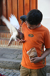 A child feeds pigeon in the streets of San Juan, Puerto Rico<br />