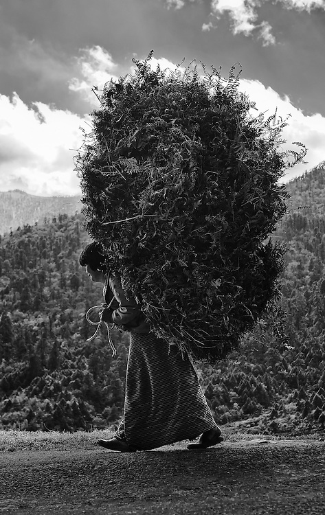 A woman carrying a huge load of dried ferns to stock up for the winter in eastern Bhutan.