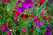 Garden flowers grow flora botanic horticulture