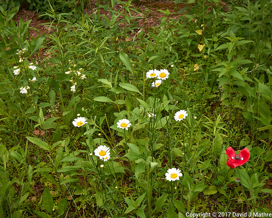 Backyard spring nature in New Jersey. Image taken with a Leica T camera and 11-23 mm lens