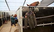 Den Haag, 12 september 2014.<br /> Het Cavalerie Ere-Escorte slaat op de Waalsdorpervlakte haar kamp op waar intensief geoefend wordt ter voorbereiding van Prinsjesdag. <br /> ANP MARTIJN BEEKMAN
