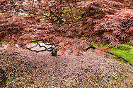 Red Maple, and Georgica Pond, West End Rd, East Hampton, NY