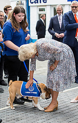 September 7, 2016 - London, United Kingdom - Image ©Licensed to i-Images Picture Agency. 07/09/2016. London, United Kingdom. Duchess of Cornwall visits The Battersea Dogs & Cats Home to officially open the new Veterinary Hospital and Centre of Excellence and meet staff, volunteers and supporters. Picture by i-Images (Credit Image: © i-Images via ZUMA Wire)