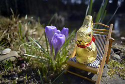 Stock photo of Chocolate Easter Bunny sitting on a deck chair in a Garden, March 27, 2013. Photo by Imago / i-Images...UK ONLY.
