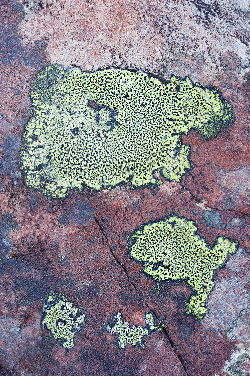 Lichens on rock, Torridon, Scotland