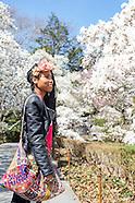 BBG | Magnolias, Daffodil Hill