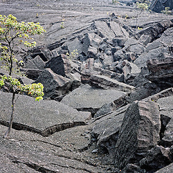 Various types of foliage blossom out of lava rock.
