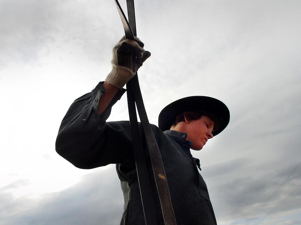 Amish harvest.  Dublin, Ohio