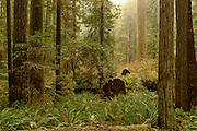 Landscape photographs from Redwood National Park, CA