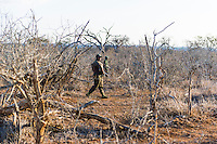 Rhino Security Patrol, Hlane Royal National Park, Swaziland