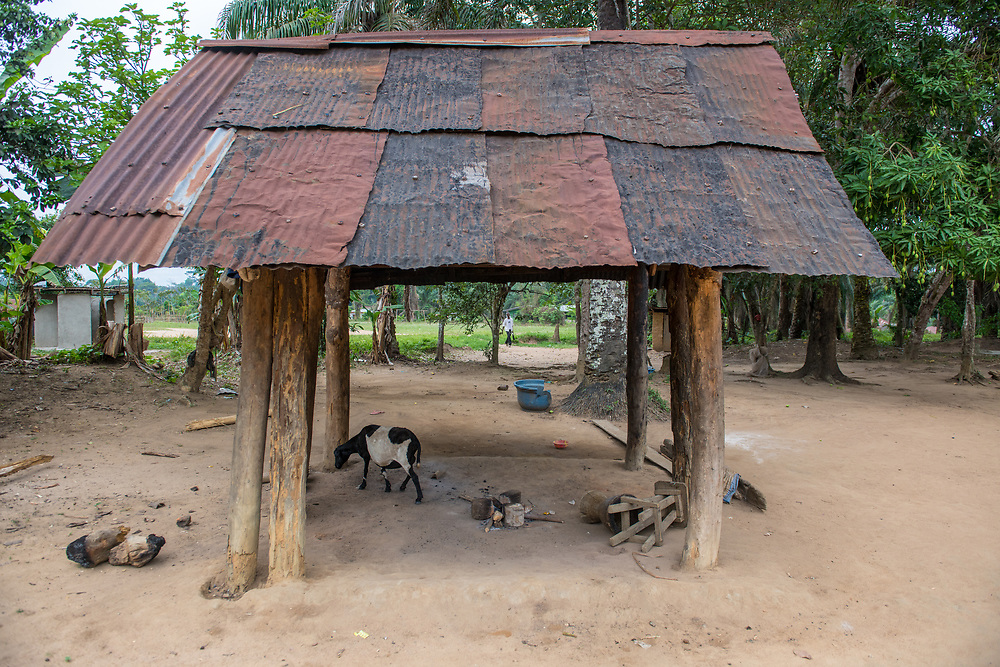 A goat walks through the kitchen in Ganta, Liberia