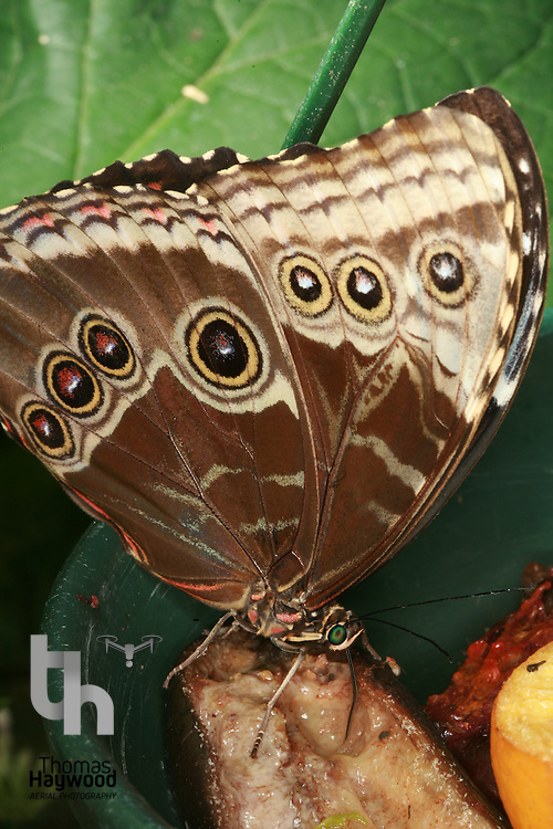 Dobbies Butterflies 28-09-07