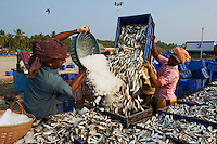 Inde, Etat du Kerala, Calicut ou kozhikode, port de peche // India, Kerala state, Calicut or kozhikode, fishing harbour