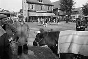 Nederland, Wijchen, 15-9-1987Veemarkt , dieren worden verhandeld. Na de veeziekten eind jaren negentig is het verhandelen van dieren in de openlucht niet meer toegestaan.Foto: Flip Franssen/Hollandse Hoogte