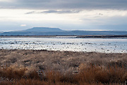 Klamath Basin wetlands, California