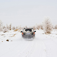 SUV vehicle riding on a snowy road at a diversiform poplar forest,  Bachu County, Xinjiang, China