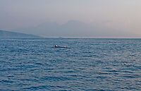 Two dolphins seen on our way to Nusa Dua