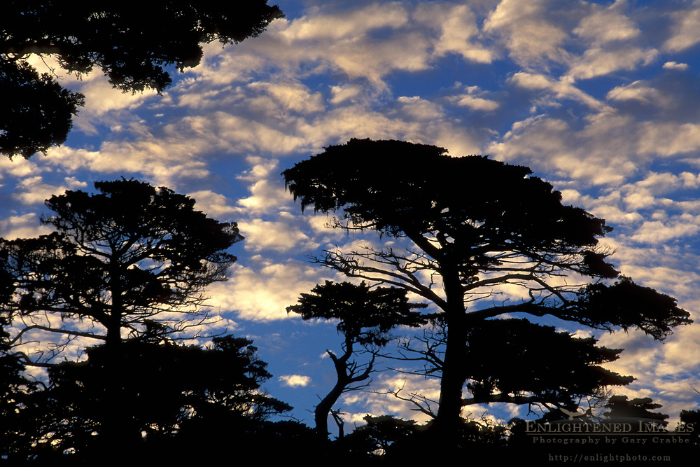 Cypress trees and clouds near Carmel on the Monterey Peninsula, Monterey County, California