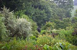 August rain at Glebe Cottage