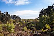 Wahner Heide :: Wahner Heath