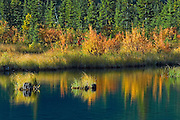 Autumn reflection in Vermillion Lakes<br /> Banff National Park<br /> Alberta<br /> Canada