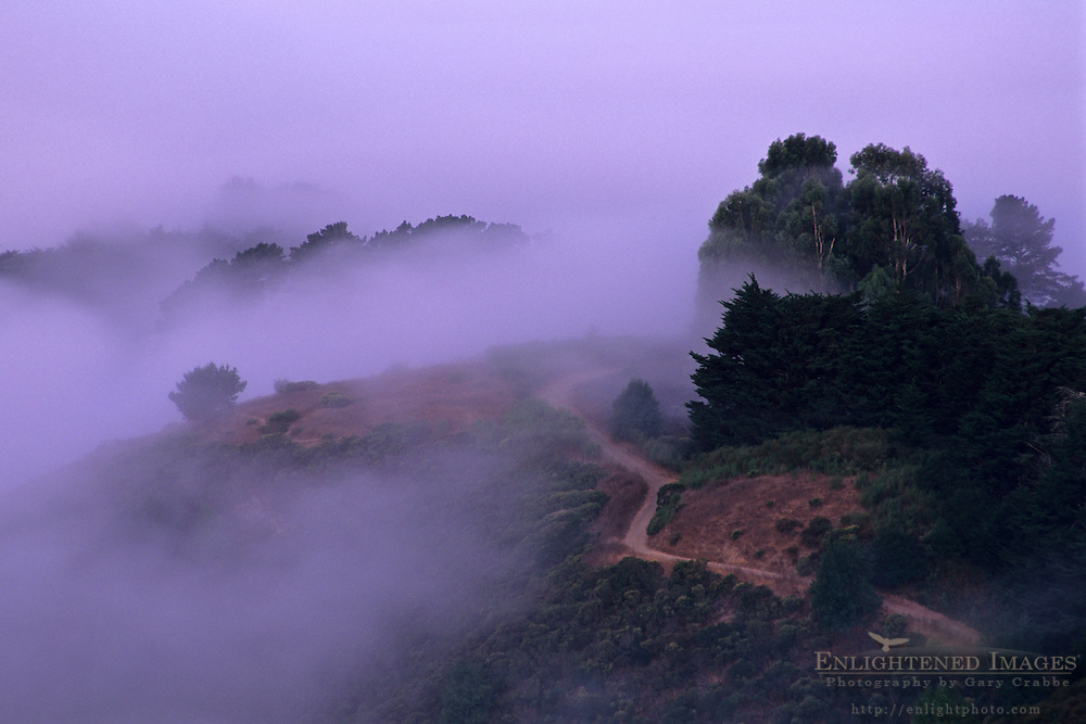 Dawn light and fog in the Berkeley Hills, Alameda County, CALIFORNIA