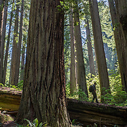 25 - Redwoods National Park